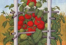 Gardening - Tomatoes / by Tonya Horvath