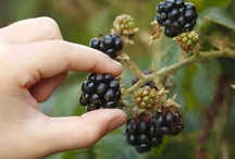 Gleaning & Foraging / by SuperAutismMama