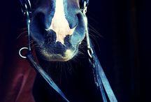 caballos / by rakhel Martínez