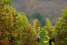 Harvest Time / by Millbrook Winery