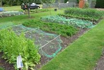 Allotment / by Lisa Clift