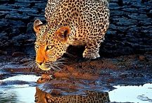 Colors (LEOPARD) / by Beth Owens