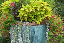 outdoor spaces / by Michelle Pyron