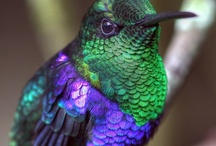 Birds & Bugs / by Yoli Pastuszak