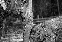 ELEPHANTS. / by Nicole Faulkenberry