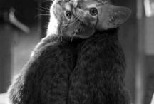 Animals! / by Anna Keithler