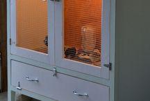 Homesteading: Critters / by Mariah Morgan-perez