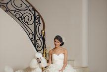 That Prestigious Wedding / by Prestigious Puppy