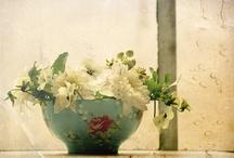 Flowers / by Barbara Dibble