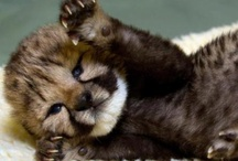 Cutest Animals Ever! / by Katy Bunch