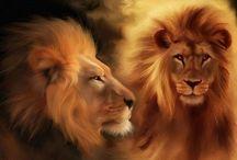 Cats >^.^< Lion Love / lions / by Debbie Beals