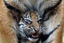 Wonderfully Wild / by Paula McCleery