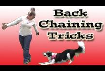 Dog Tricks / Dog training tricks, clicker training, Border Collies, Dogs, Cats, Videos, DVDs, Pam's Dog Academy, Pamela Johnson www.pamsdogtraining.com Dog Tricks  / by Pam's Dog Academy