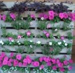 Gardening Fun - Recycle! / by Hyde Park Feed & Country Store