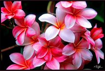 Flores / by Roseli Demunno