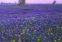 Only in Texas / by Debra Pack Russeau
