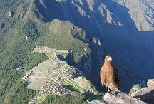 Peru / by Igor Mamantov