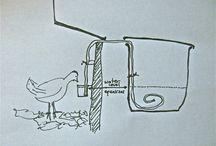 Chickens / by Kandice Williamson