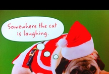 funny Ha Ha / by Liz Erickson