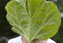 Leaf DIY / Natural art idea. / by Homebase UK