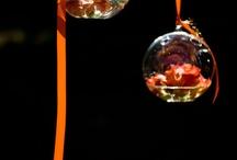 Orange Crush / by Sharon Marrero