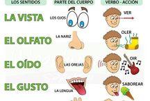 los cinco sentidos / by luis pss
