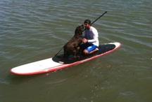 Paddle boarding  / by Heidi Katherine