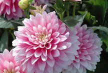 Flowers / by Jenny Stern