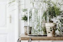 botanicals / by Mrs W