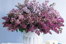 Flower Arrangements / by Reta Wilson