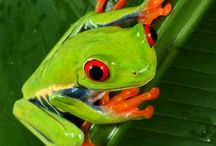 For the Love of Frogs / by Kathy Moncrief