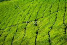 Agriculture / by Cosetta Silva