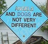 Animals-Dogs / by Jeannie Ruggiero