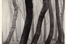 Trees / by tami lahis