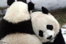 Panda / by April Tai