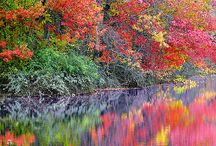 Fall Back / by Pam O'Connell