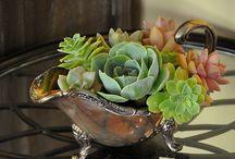 Tiny Garden / by Elaine Kendrick