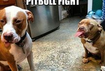 Don't bully my breed / by Sandra Visentin