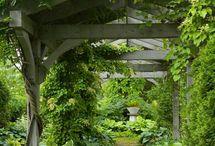 Gardens/Gardening  / by Cynthia Ernest