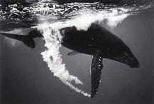 Non-Human Animals / by Brett Christensen