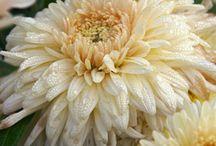 plant cultivars/varieties / by Matt Batzlaff