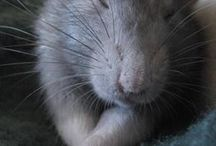 wonderful rats / by Carmon Williams