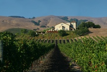 Sonoma Wineries / by Sonoma.com