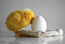 chicks c: <3 / by Giuli Marchina