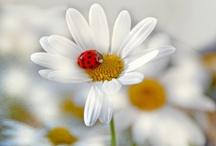 Ladybugs / by Courtney Barr