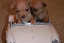 cute little pets / by Lyndsey Carroll