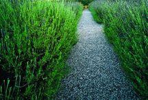 gravel pathways / by Kami Watkins
