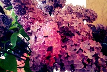 flowers / by Nino Metreveli