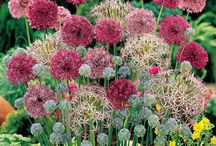 Gardening And Yard Ideas / by Stacey Simard