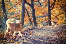 Dog Walks / by We Love Westies